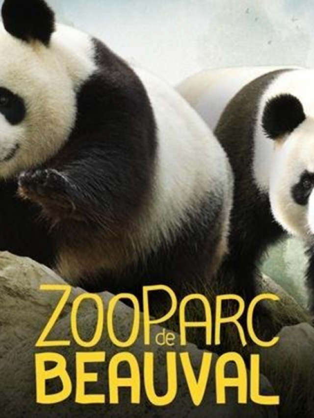 Découverte du zoo parc de Beauval