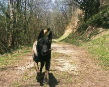 Arreté du Maire portant sur la réglementation de la circulation des animaux domestiques sur les voies ouvertes à la circulation publique, ainsi que sur les domaine publics ou privés de la commune de Champagnole.
